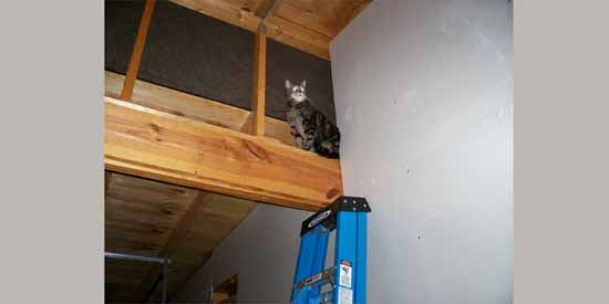 Butchie in the Rafters.