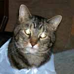 Butchie does enjoy his plastic bags.
