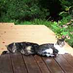 Pee Wee and Butchie on the back deck.