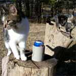 Pee Wee and Butchie on their wood pile.